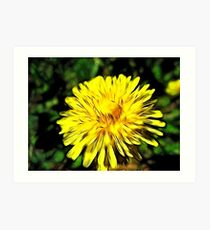 Nothing like the good ole Dandilion!   Art Print