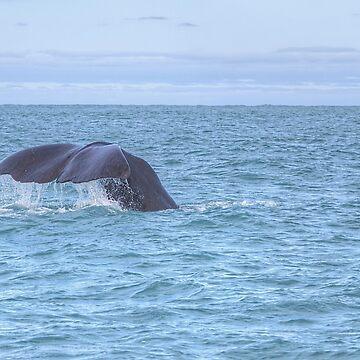 Whale watching, Kaikoura by PaulaMcManus