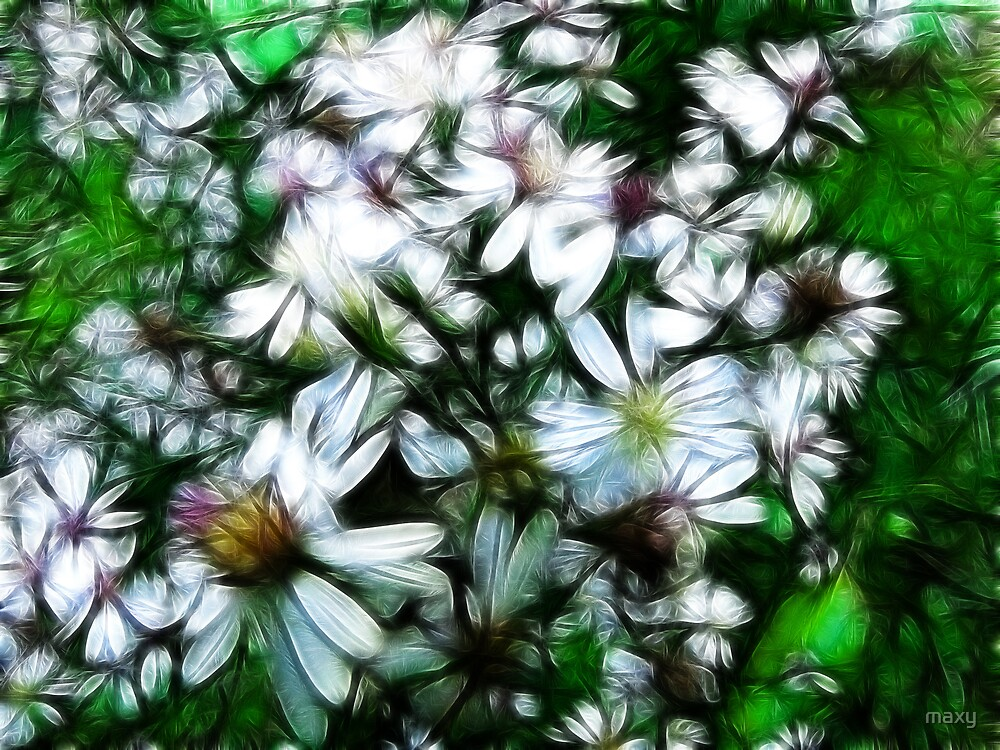 Wild Mountain Asters...  by maxy