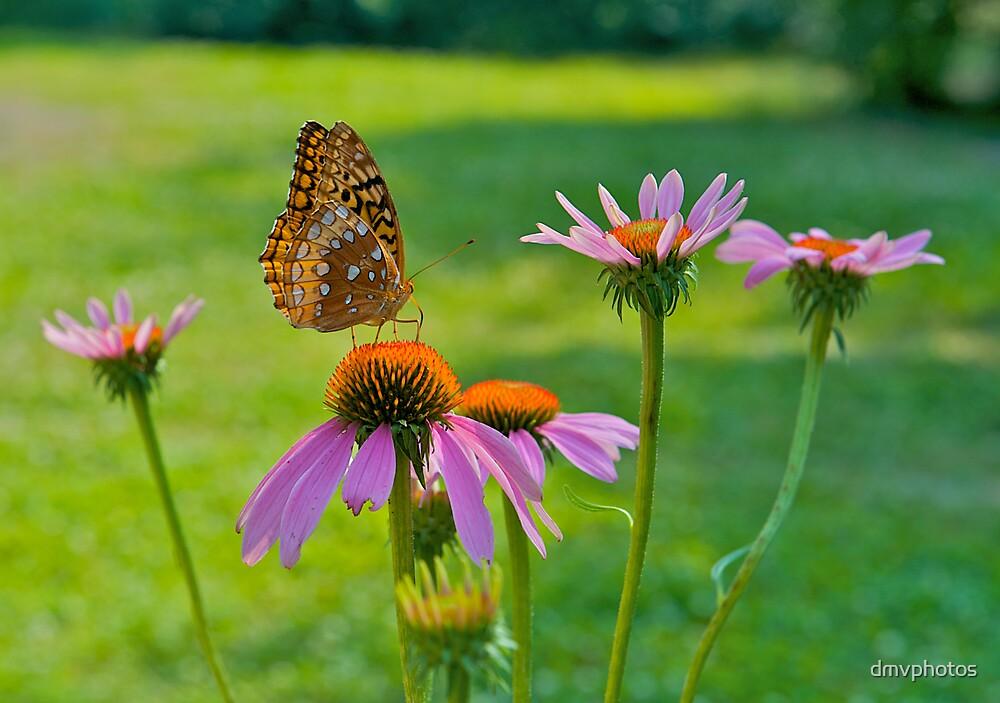 Garden Beauty by dmvphotos