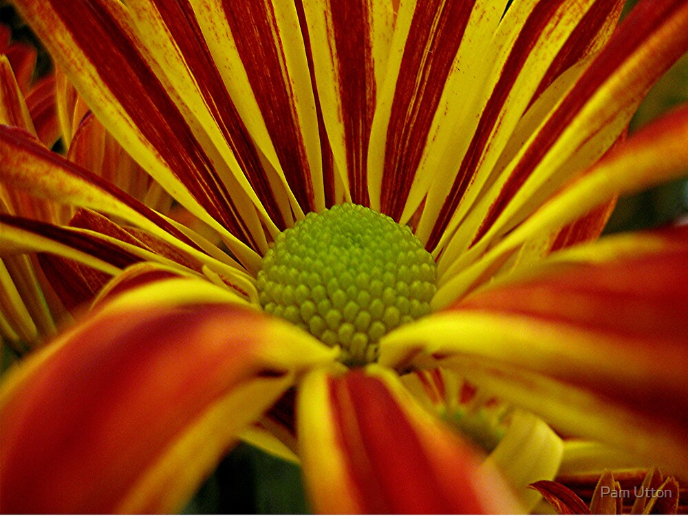 open up for autumn by Pam Utton