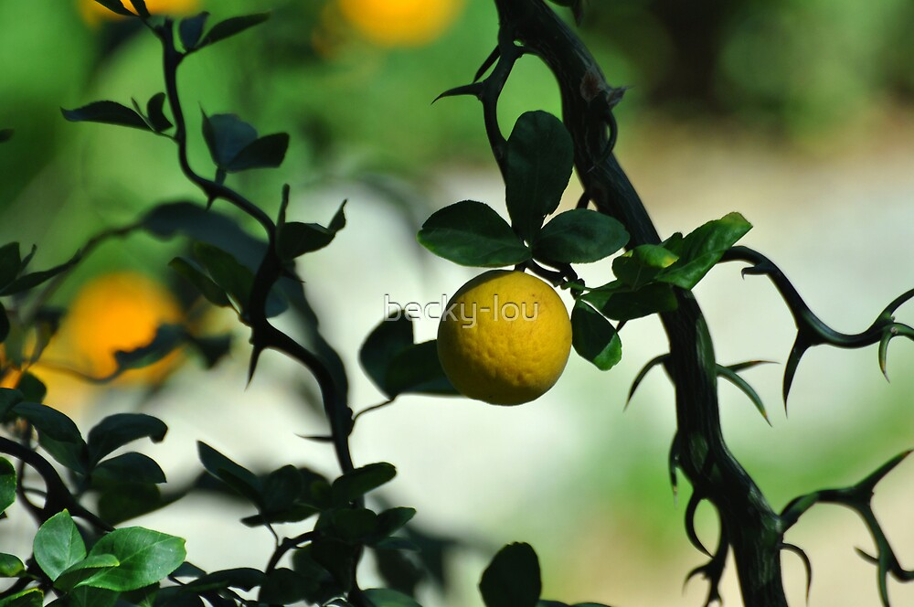 I think it's an Orange.... by becky-lou
