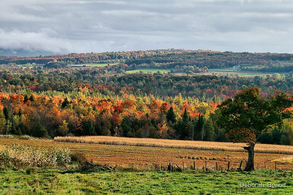 Fall Colors In Franklin by Deborah  Benoit