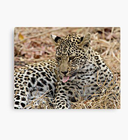 Leopard Cub Expressing Herself Canvas Print