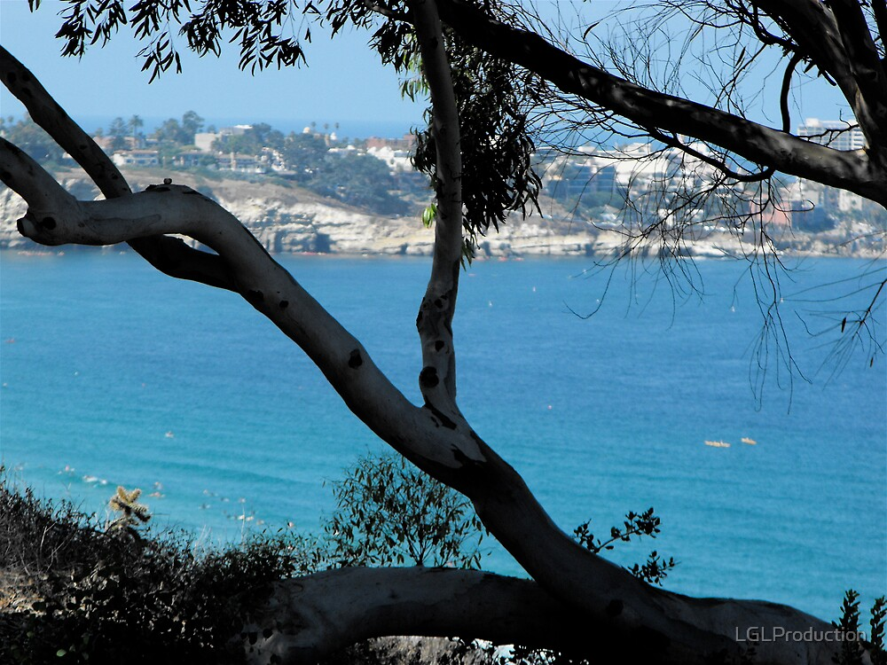 La Jolla Tree by LGLProduction
