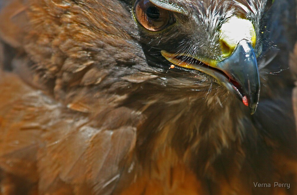 Raptor close up by Verna  Perry