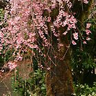 Weeping Cherry Tree by mistyrose