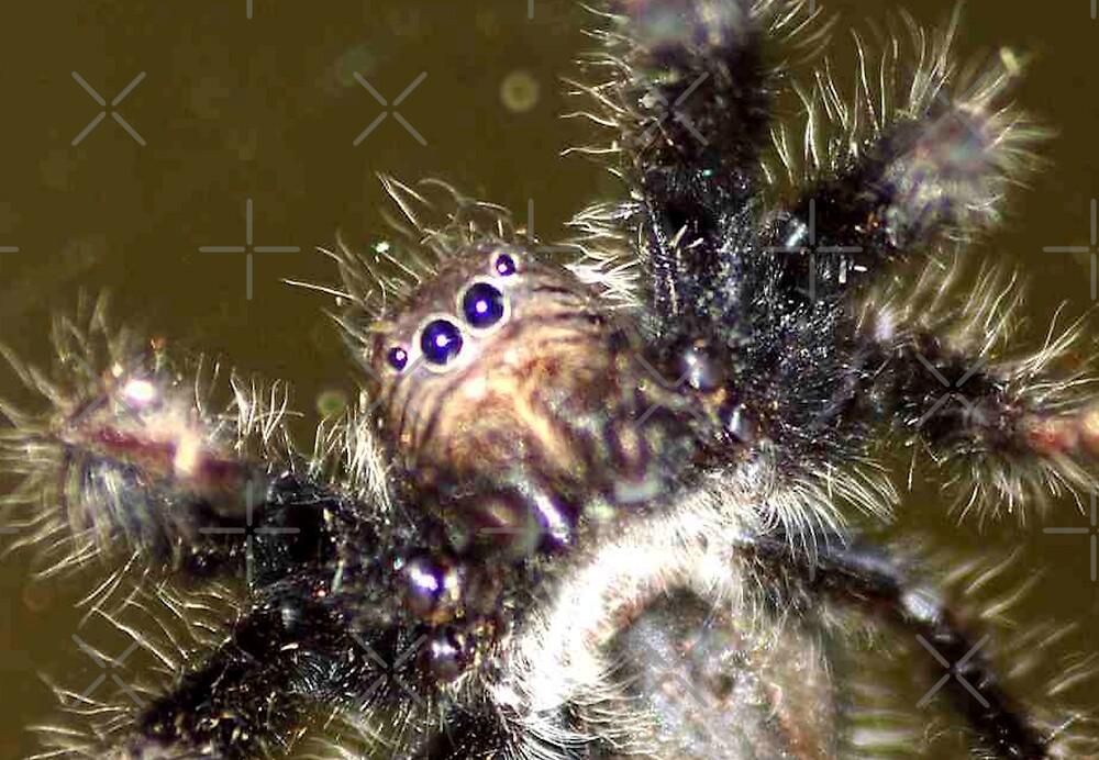 'FOUR SPIDER EYES' by Magriet Meintjes