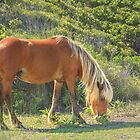 Beach Blond Grazing by Owed To Nature