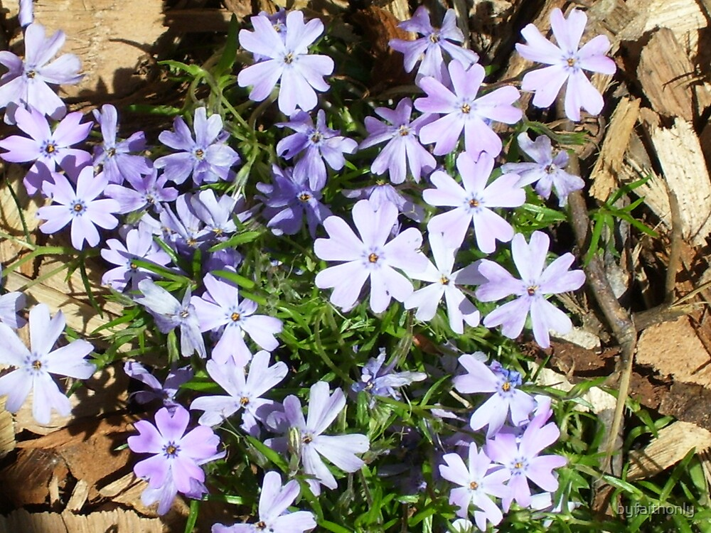 Periwinkle by byfaithonly