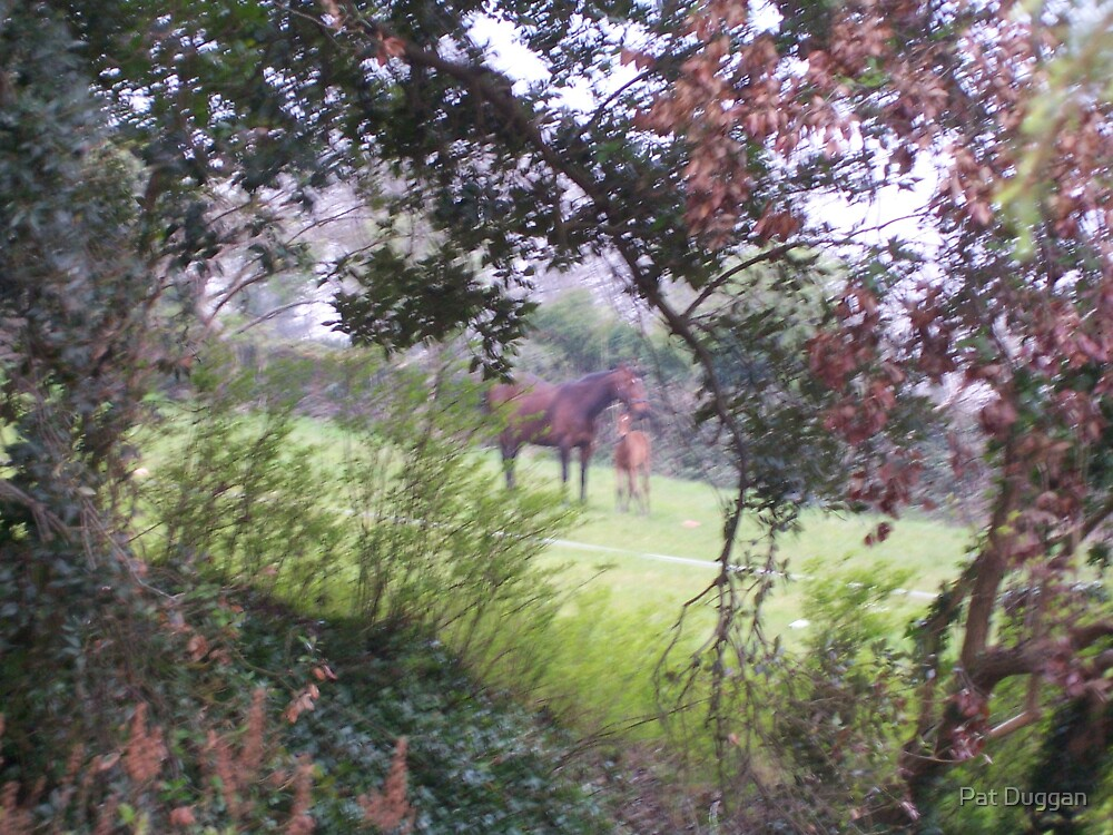 Horse and Foal---Through the Hedge[Please View Larger] by Pat Duggan