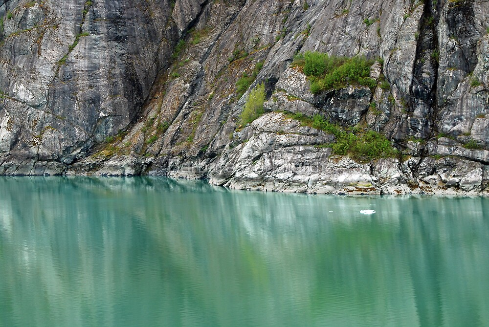 Glacier Bay ~ Alaska by Barbara Burkhardt