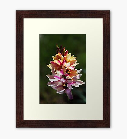 Ixia's Natural Bouquet Framed Print