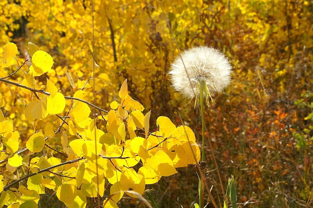 Fall Aspen Leaves with Dandelion Seeds by Robert W. Spath II