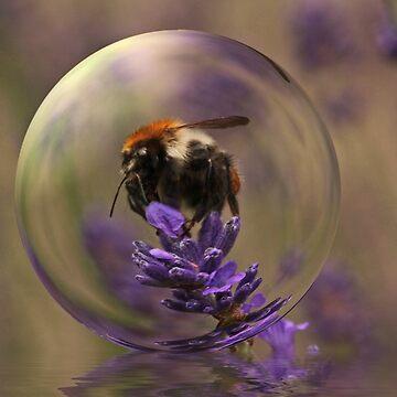 Bumblebee on Lavendar von RosiLorz