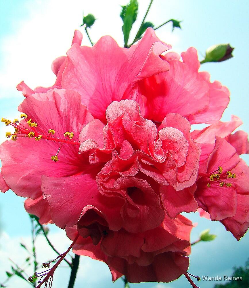 Pick Hibiscus by Wanda Raines