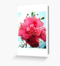 Pick Hibiscus Greeting Card