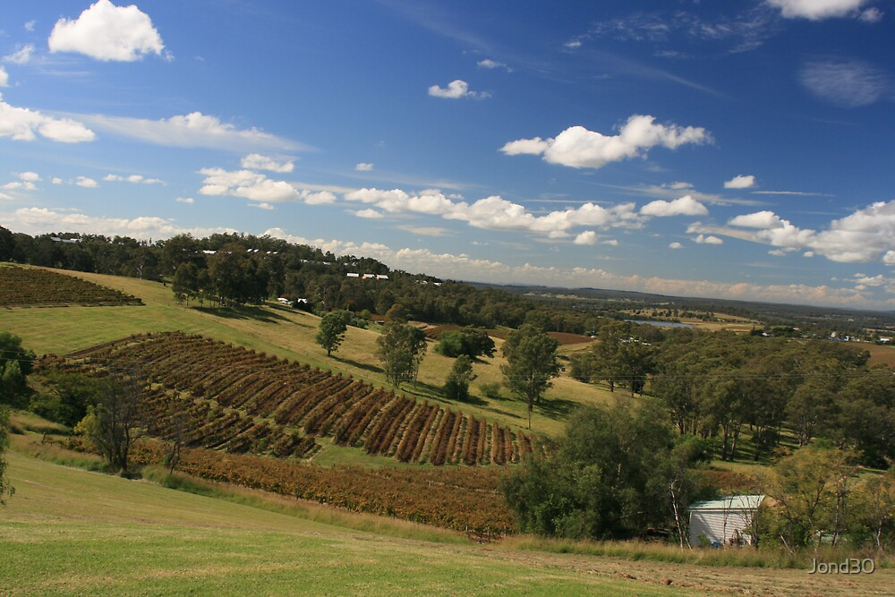 Hunter Valley Vineyards by Jond30