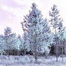 Young Pines  I by Ostar-Digital