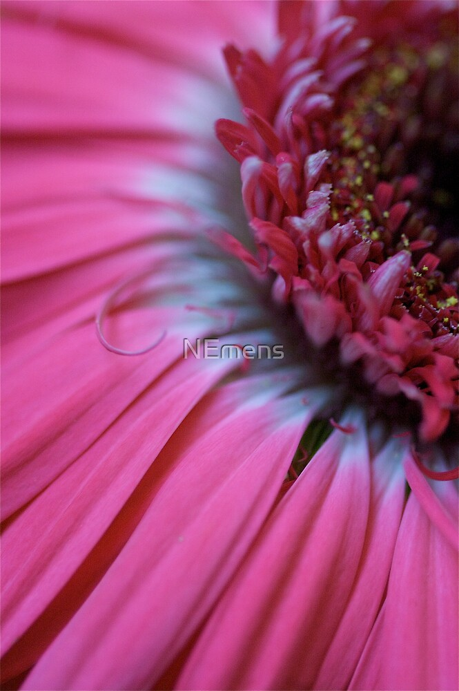 pink daisy by NEmens