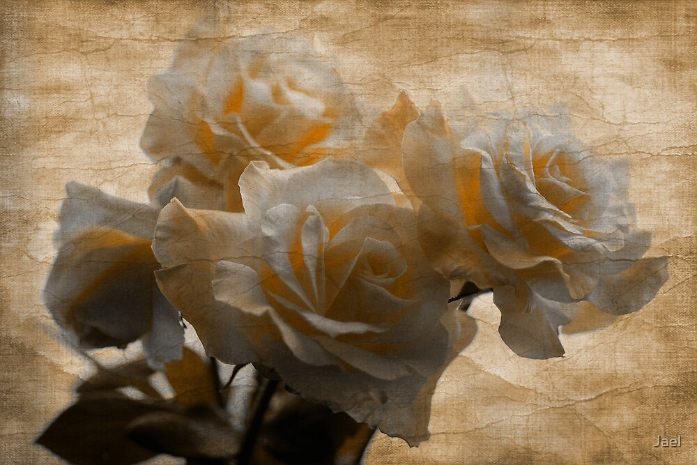 FADED ROSES by Jael