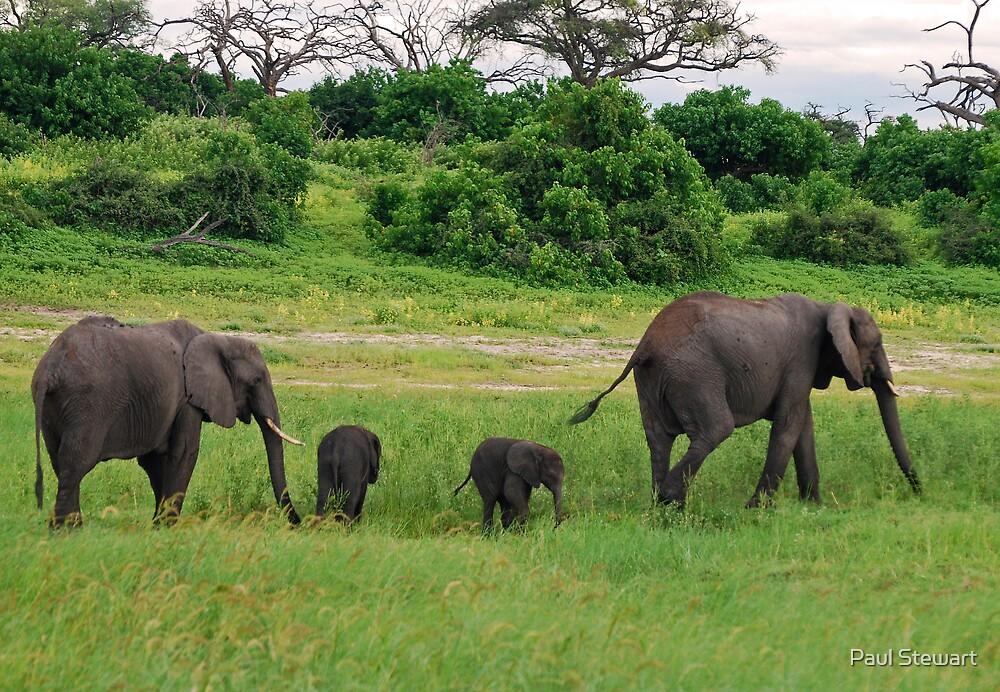 Elephant Family - Chobe National Park, Botswana, AFRICA by Paul Stewart