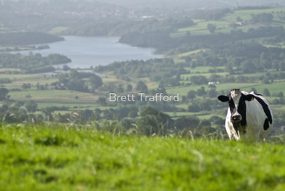 Cow by Brett Trafford