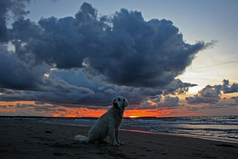 Sunset by Trine