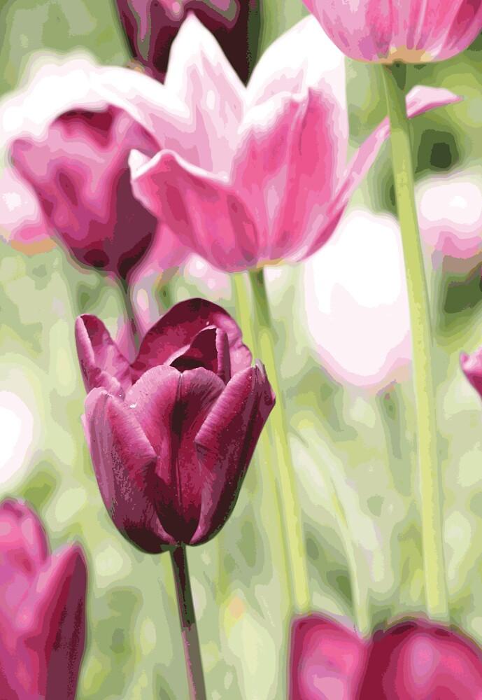 Purple Tulip by chris2766