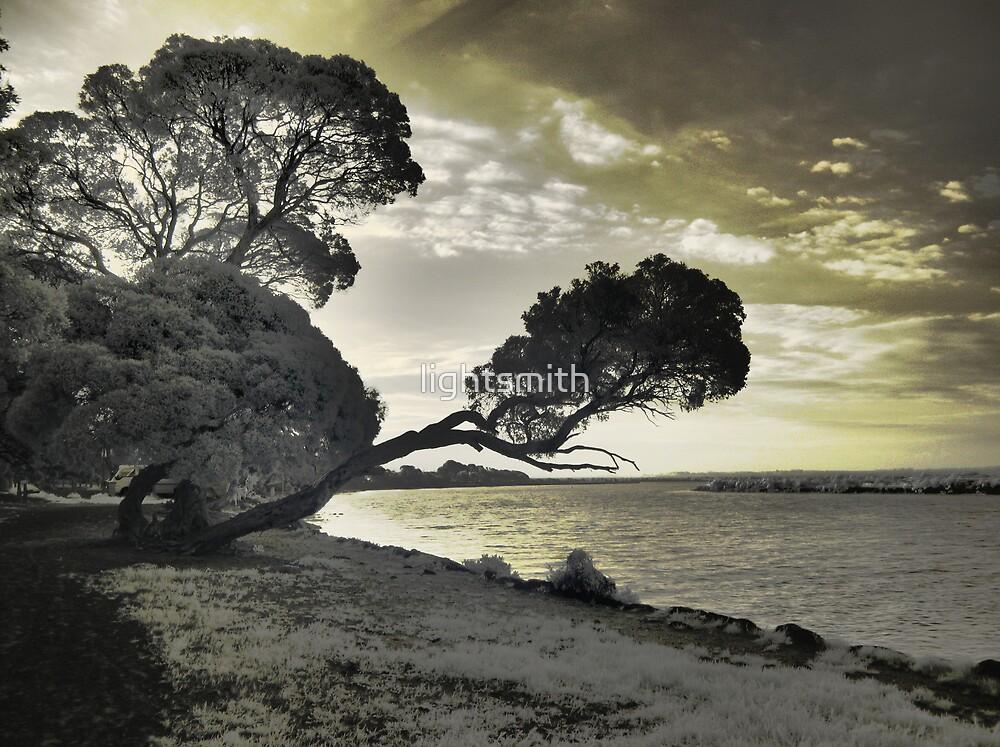 Tree study by lightsmith