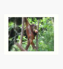 Borneo orangutang #1 Art Print