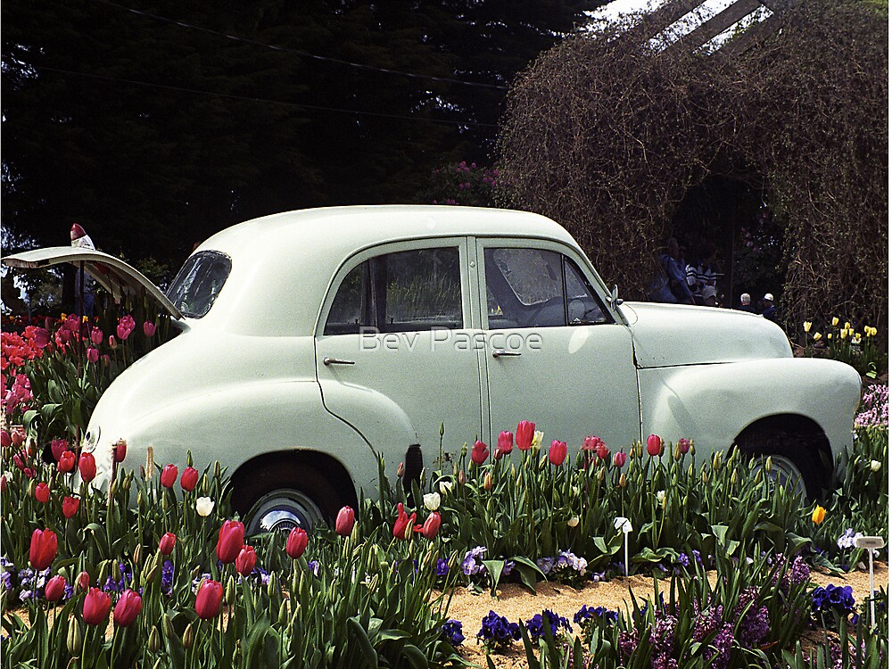 Old Holden with Tulips by Bev Pascoe