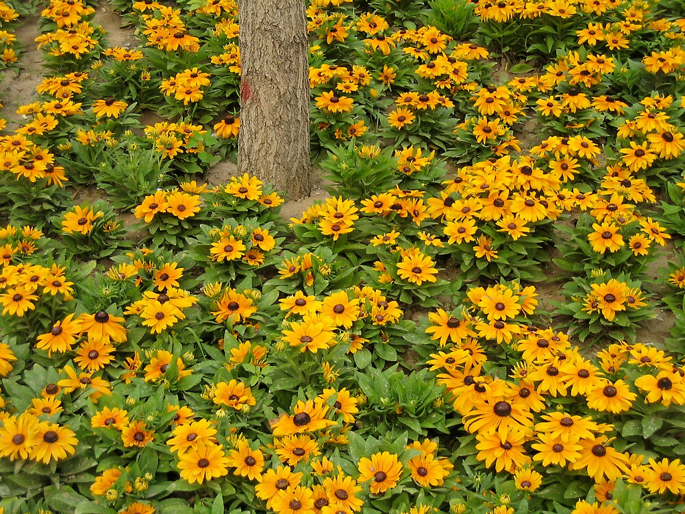Flowers by brettus