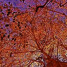 Leaves of estranged Autumn by Julie Marks