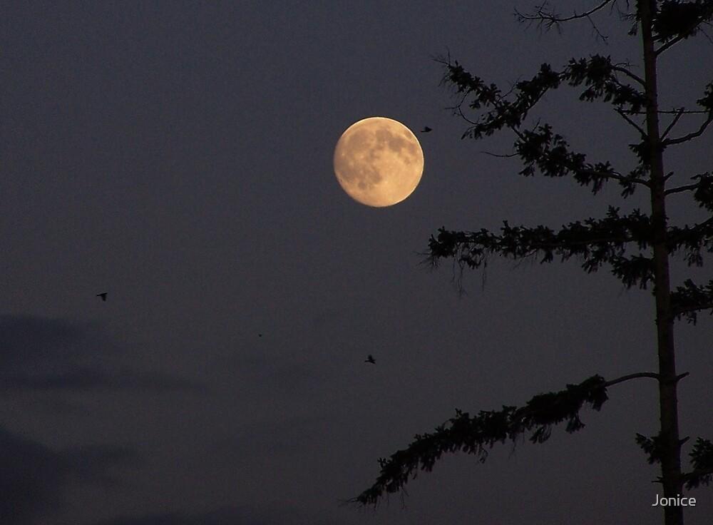 Night Light by Jonice