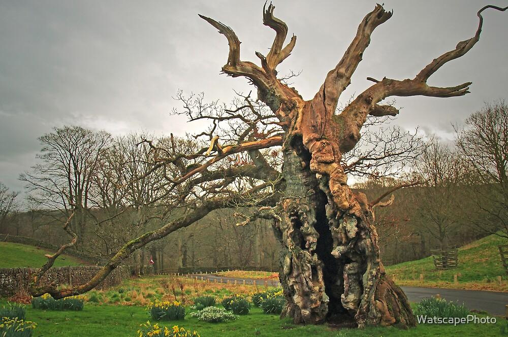 The Laund Oak by WatscapePhoto