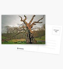 The Laund Oak Postcards