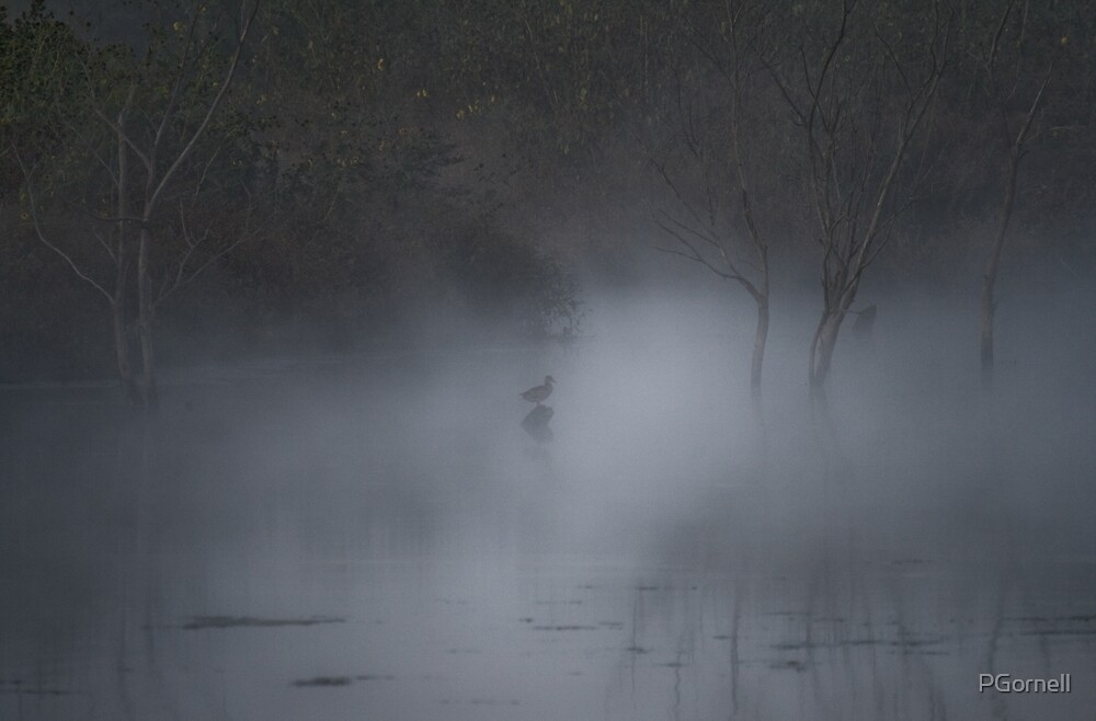 A Mallard duck, hidden in the mist of an early morning... by PGornell