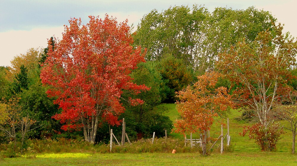Blustery fall day by Patty Gross