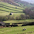 Swaledale Barns by Jon Tait