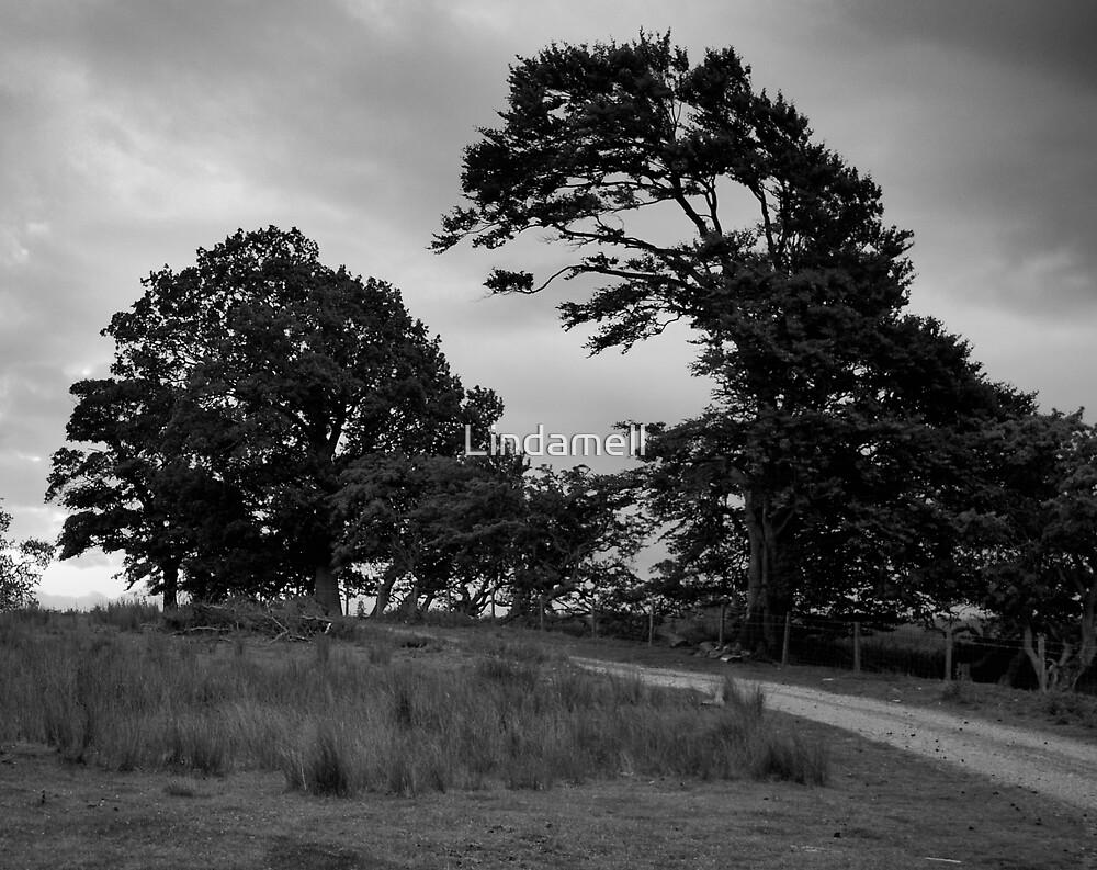 Tree turns Predator by Lindamell