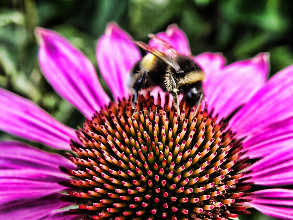Busybee 2 by Amkia