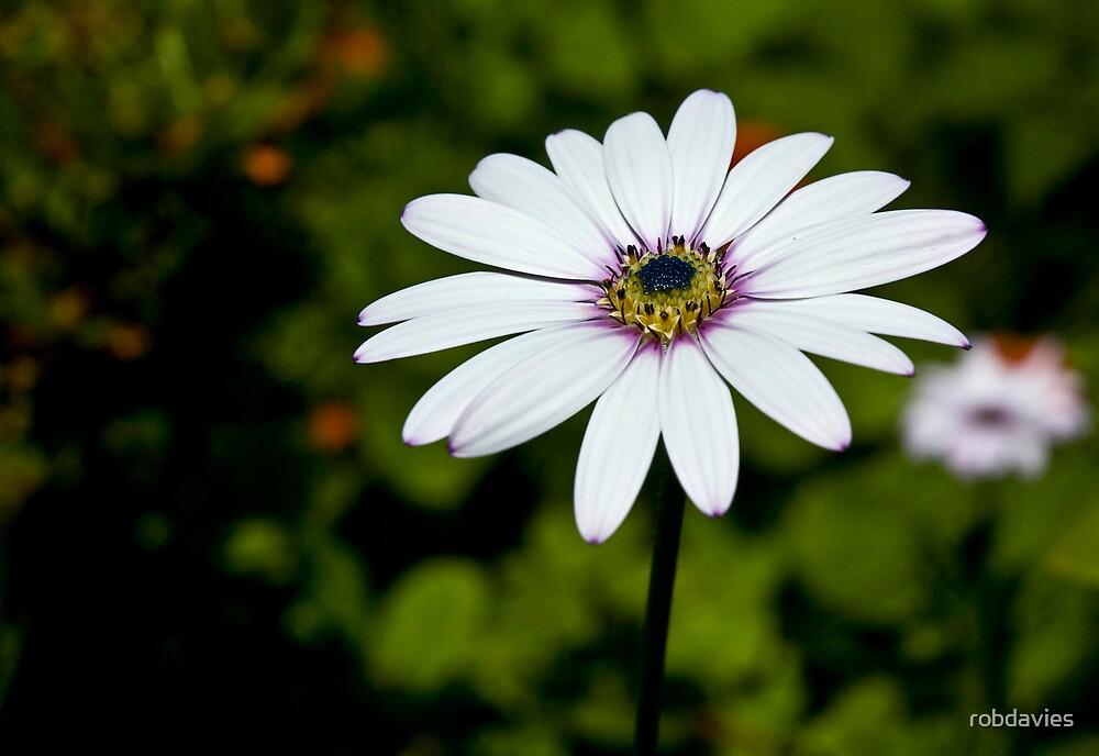 The Flower by robdavies
