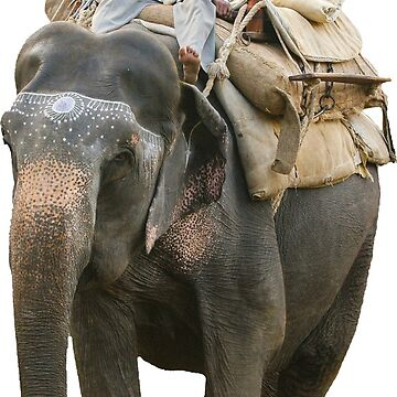 Indian Elephant with Mahoot by Dalyn