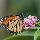 Monarch 2018-20 by Thomas Young
