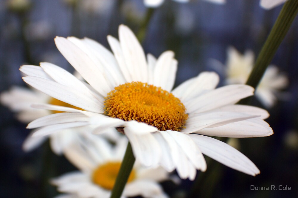 Upsy-Daisy by Donna R. Cole