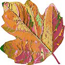 wundervolles Blatt, Herbst, Baum, Laub, Jahreszeit von rhnaturestyles