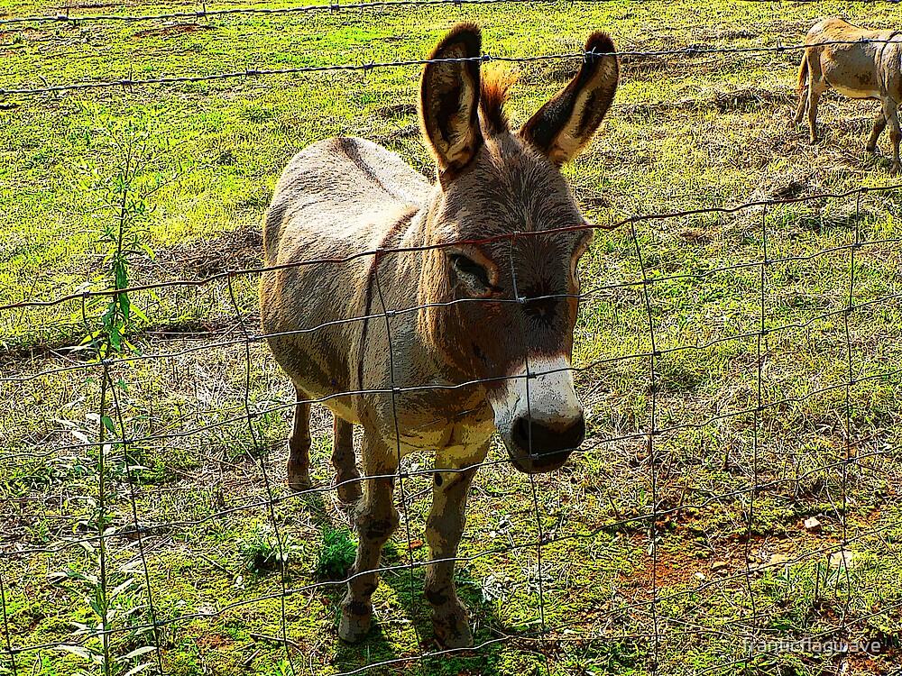 """""""'Donkey"""" by franticflagwave"""