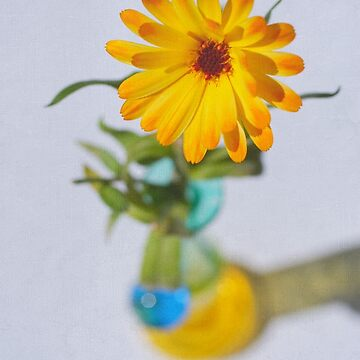 Marigold Ballerina by Kasia-D