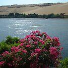 The Nile by inglesina